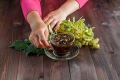 Fiori del tiglio usati per tè dalla gola irritata immagine stock libera da diritti