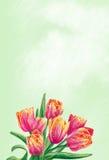 Fiori del tulipano illustrazione di stock