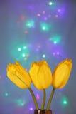 Fiori del tulipano: Cartolina d'auguri - foto di riserva della sfuocatura fotografie stock