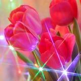 Fiori del tulipano: Cartolina d'auguri - foto di riserva della sfuocatura Fotografia Stock