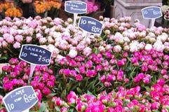 Fiori del tulipano da vendere Fotografia Stock