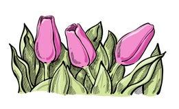 Fiori del tulipano di Thee con le foglie Fotografie Stock