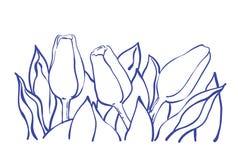 Fiori del tulipano di Thee con le foglie Immagini Stock