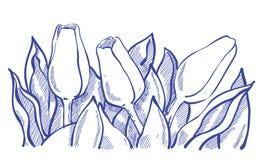 Fiori del tulipano di Thee con le foglie Fotografia Stock Libera da Diritti