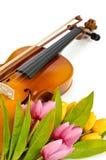Fiori del tulipano e del violino Immagine Stock Libera da Diritti