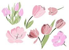 Fiori del tulipano nel vettore isolati su bianco illustrazione vettoriale