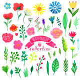 Fiori dell'acquerello e foglie, rami, insieme di elementi delle erbe Accumulazione floreale Illustrazione disegnata a mano di pro Fotografie Stock