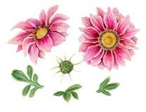 Fiori dell'acquerello isolati su un fondo bianco royalty illustrazione gratis
