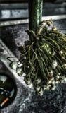 Fiori dell'aglio e vassoi di cenere fotografie stock libere da diritti