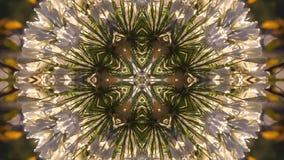 Fiori dell'allium in un video geometrico del fiore archivi video