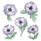 Fiori dell'anemone messi dei disegni Ideale per utilizzare nelle progettazioni dell'invito di nozze Immagine Stock