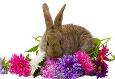 Fiori dell'aster e del coniglietto Fotografia Stock Libera da Diritti