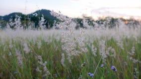 Fiori dell'erba Fotografie Stock Libere da Diritti
