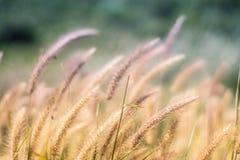 Fiori dell'erba del fondo fotografia stock