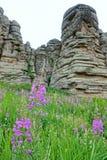 Fiori dell'erba del salice Fotografia Stock Libera da Diritti