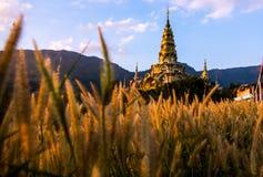 Fiori dell'erba e pagoda dorata Fotografia Stock