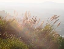 Fiori dell'erba sotto la lampadina sul pomeriggio Fotografia Stock