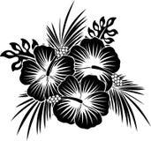 Fiori dell'ibisco con le foglie in bianco e nero immagini stock