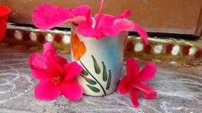 Fiori dell'ibisco, ibisco, malva rosa Fotografia Stock Libera da Diritti