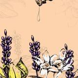 Fiori dell'illustrazione di vettore per olio essenziale Immagini Stock Libere da Diritti
