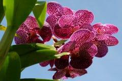 Fiori dell'orchidea che la natura crea fotografia stock libera da diritti