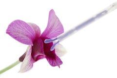 Fiori dell'orchidea e del controllo delle nascite Fotografia Stock Libera da Diritti