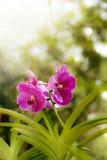 Fiori dell'orchidea ed indicatore luminoso luminoso del sole fotografia stock
