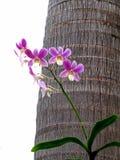 Fiori dell'orchidea nel giardino Fotografia Stock Libera da Diritti