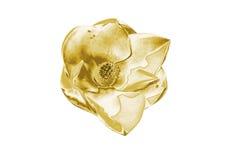 Fiori dell'oro immagine stock