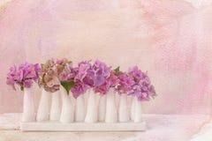 Fiori dell'ortensia in poco vaso fotografie stock
