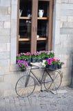 Fiori della bicicletta e mattone della parete Immagine Stock Libera da Diritti