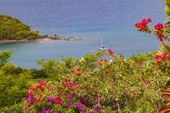 Fiori della buganvillea, Antigua Fotografie Stock Libere da Diritti