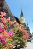 Fiori della buganvillea in tempio tailandese fotografia stock