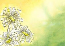Fiori della camomilla nello stile grafico Progettazione di un fondo, manifesto, carte, saluti, nozze, inviti, pubblicità, insegna illustrazione vettoriale