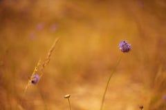 Fiori della duna fotografie stock