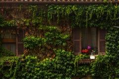Fiori della finestra dell'Italia Fotografia Stock Libera da Diritti