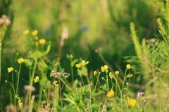 Fiori della foresta Fotografia Stock