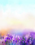 Fiori della lavanda della pittura a olio nei prati Fotografia Stock Libera da Diritti