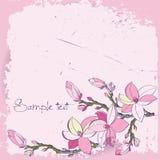 Fiori della magnolia per la scheda o l'invito Fotografia Stock Libera da Diritti
