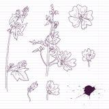 Fiori della malva del disegno dell'inchiostro illustrazione vettoriale