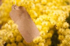Fiori della mimosa e 8 marzo della cartolina Immagine Stock