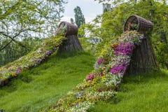 Fiori della molla della petunia che circolano sull'erba verde Immagine Stock Libera da Diritti