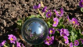 Fiori della molla e della sfera di cristallo in vento stock footage