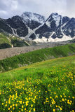 Fiori della montagna Fotografie Stock Libere da Diritti