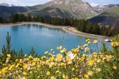 Fiori della montagna Immagini Stock Libere da Diritti