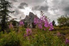 Fiori della montagna Fotografia Stock Libera da Diritti