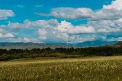 Fiori della montagna del cielo blu immagine stock