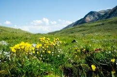 Fiori della montagna riempiti prato Fotografie Stock
