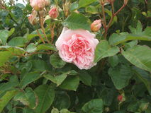 fiori della natura Fotografia Stock Libera da Diritti