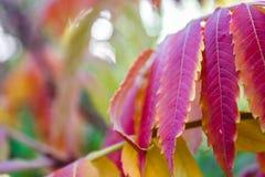 Fiori della natura del paesaggio Fotografie Stock